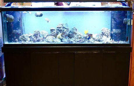 Fish – Pet Palace WV